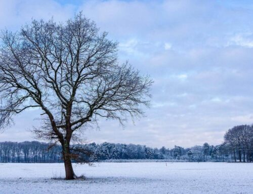 Winter Preparedness: What's the Difference Between a Winter Weather Advisory, Watch and Warning?